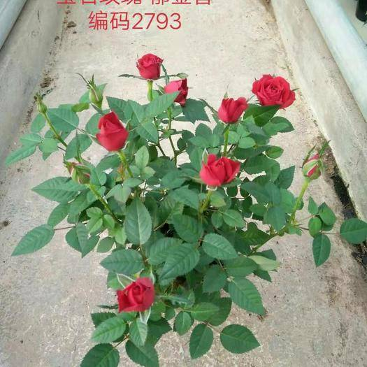 云南省昆明市呈贡区塑料盆 110杯装,小盆花