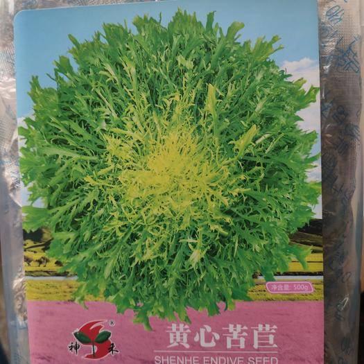 沭阳县 苦苣种子黄心苦苣种子四季蔬菜种子花叶苦苣种子