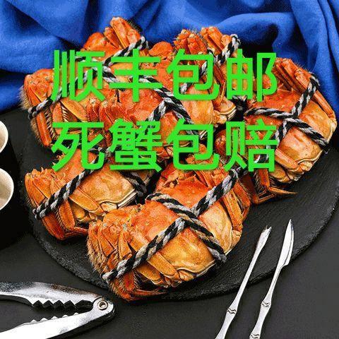 兴化市 现货公母蟹5.5-2.0两大闸蟹鲜*特大蟹超大螃蟹*体海鲜