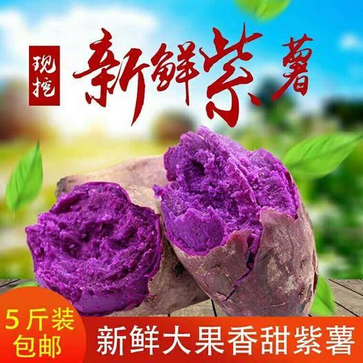 仙桃市 湖北仙桃紫薯新鮮上市  特價5斤裝包郵 支持一件代發