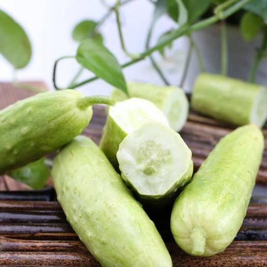 烟台莱阳市 生吃有味道的水果黄瓜,烟台海阳白玉黄瓜人民大会堂国宴菜品现货