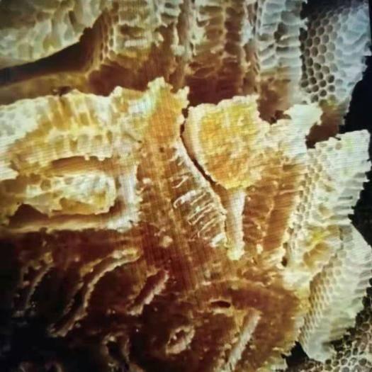 陕西省汉中市佛坪县 深山土蜂蜜
