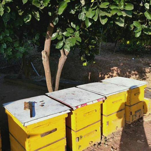 湖南省株洲市攸县 老爸养蜂人,纯天的高山百花蜜无任何添加的