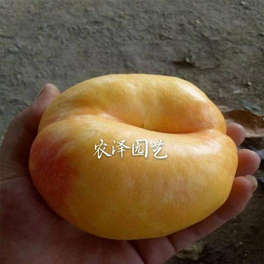 青岛平度市 极早熟黄金油蟠桃苗 早熟桃树苗 黄金蟠桃苗 油桃苗