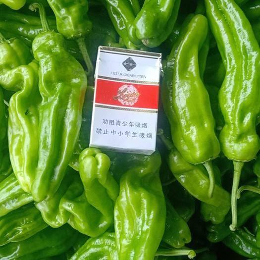山东省枣庄市峄城区 新鲜泡椒大量上市  货优价低  欢迎老板前来选购
