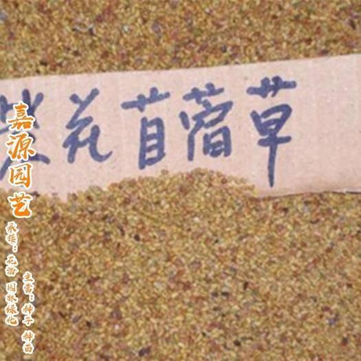 成都锦江区 苜蓿草种子新种子包邮