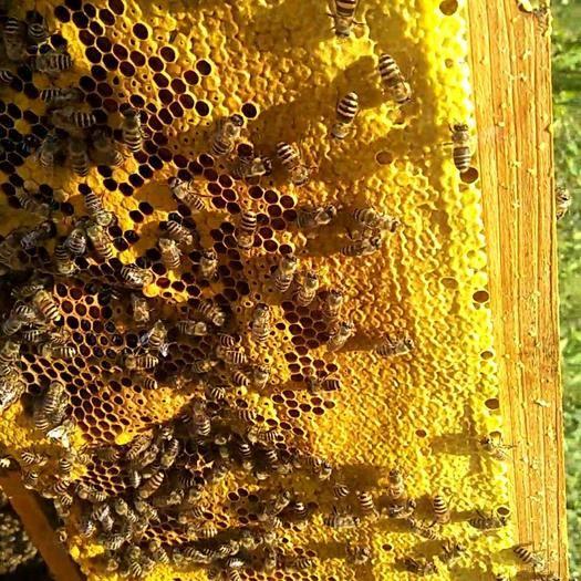 贵州省毕节市纳雍县蜂皇浆 塑料瓶装 2年 95%以上