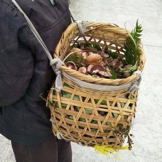 贵州省黔南布依族苗族自治州贵定县松乳菇 新鲜野生食用菌