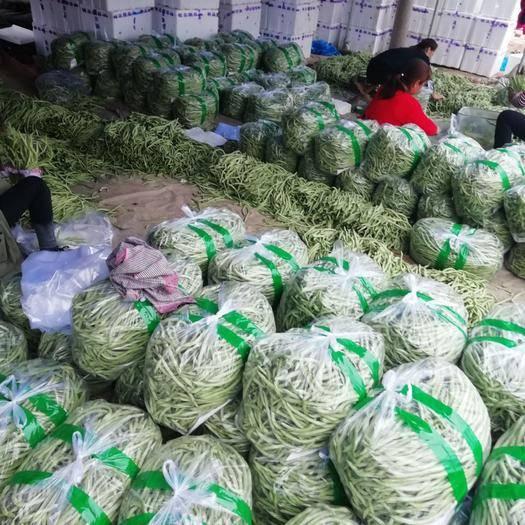 山东省聊城市莘县无筋四季豆 无丝豆大量上市中。质量好