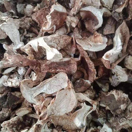 山西省吕梁市方山县 山蘑菇(杨树蘑菇)