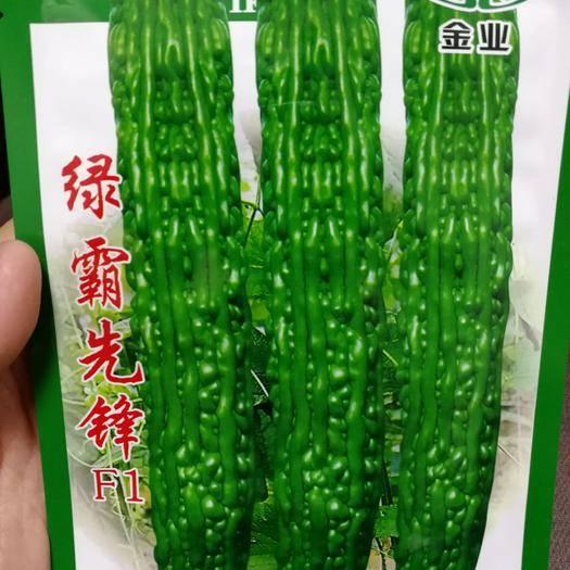 夏邑縣 綠霸先鋒綠肉苦瓜種子品質好耐儲運