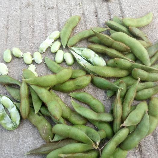 江苏省淮安市淮安区 我们这里有大量内外有毛豆角出售