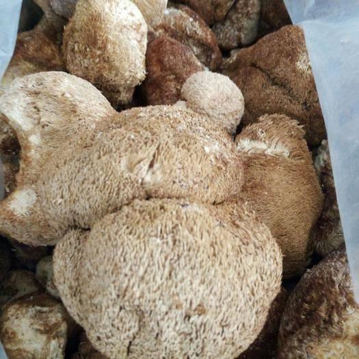 黑龙江省鸡西市虎林市生野干榛蘑 纯野生榛蘑猴头。来自完达山的山珍
