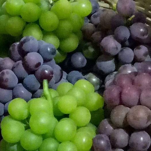 绍兴紫罗兰葡萄 0.8-1斤 10%以下 1次果