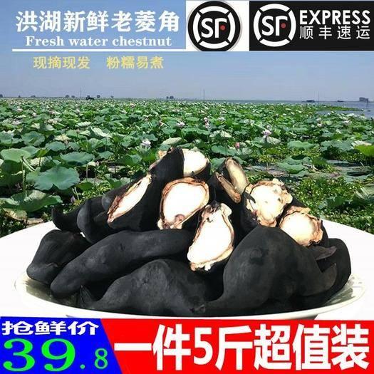 荊州 菱角新鮮5斤順豐包郵非菱角熟的即食菱角苗種植菱角種籽菱角粉