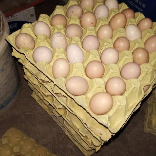 安徽省铜陵市郊区 鸡蛋