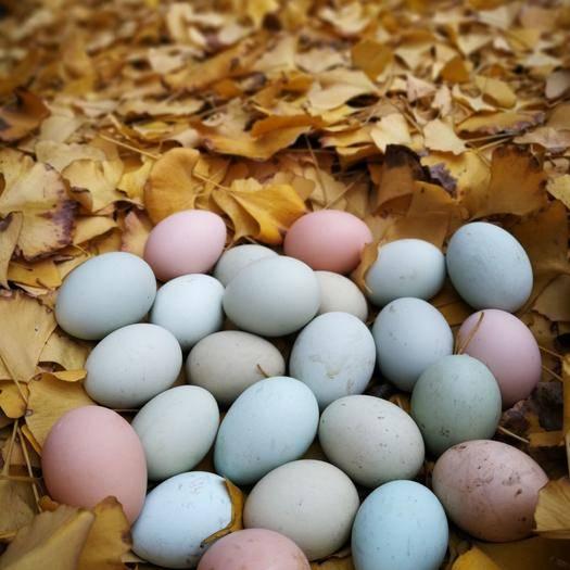四川省泸州市叙永县 纯粮绿壳鸡蛋,货源充足。