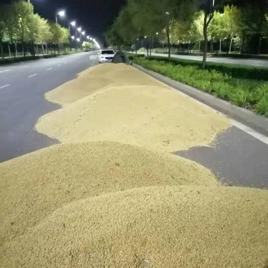 宁津县 2019年大豆刚刚开始收割       日供300吨左右