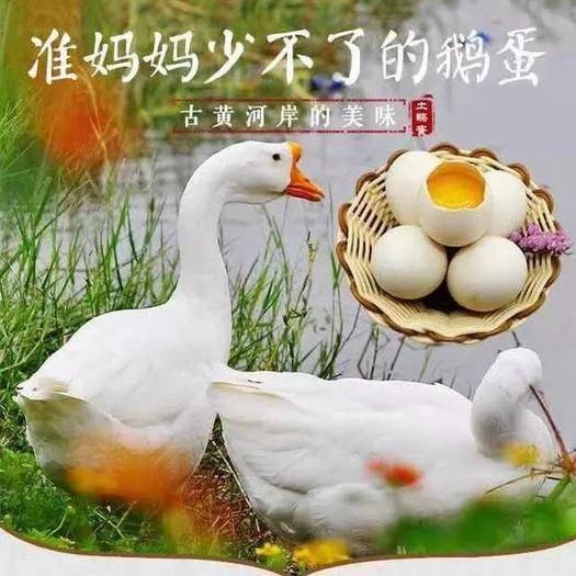 山东省淄博市高青县 百年百亩果桑农场初产鹅蛋上市了