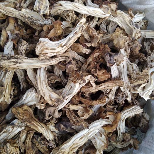 黑龙江省牡丹江市东宁市榛蘑 野生木耳蘑