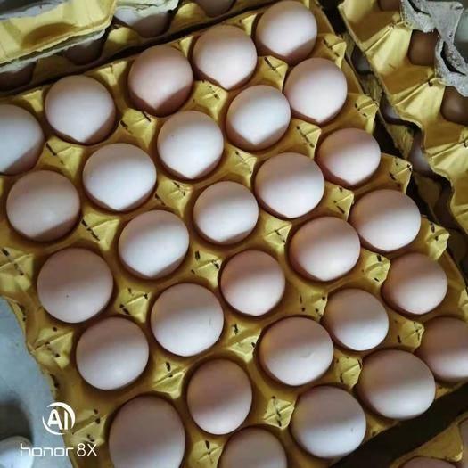 河南省南阳市卧龙区 出售鸡蛋
