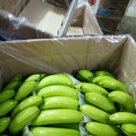南靖县巴西香蕉 福建地蕉大量上市咯,质量自己看
