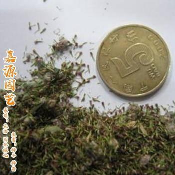 艾草种子包邮(可室内烟熏杀毒)