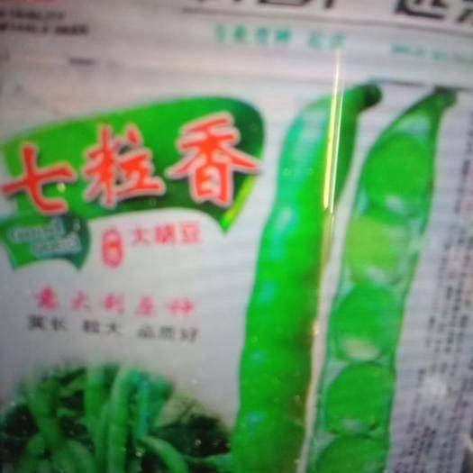 济南 七粒蚕豆种子高产蚕豆良种