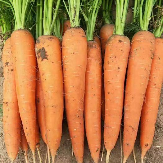 聊城莘縣三紅胡蘿卜 誠信菜站,代收各種蔬菜,水果。