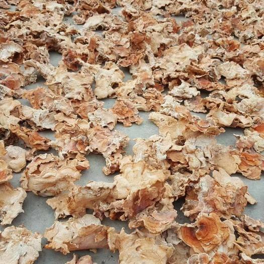 山东省济宁市鱼台县榆耳 种植基地,无公害,绿色食品