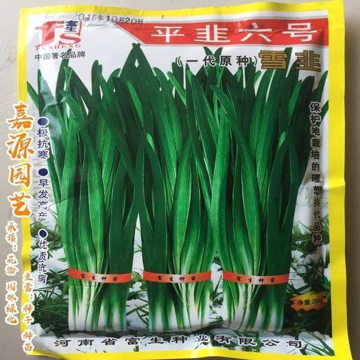 成都 平韭6號韭菜種子