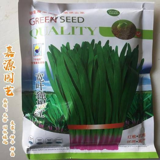 成都 寬葉獨根紅韭菜種子