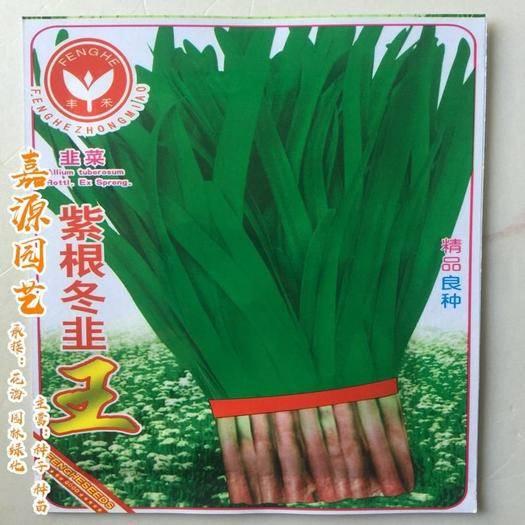 成都 紫根韭菜種子白根韭菜種子包郵