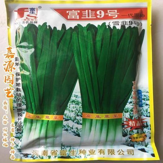 成都 富韭9號韭菜種子