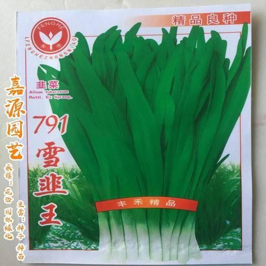 成都 791雪韭王韭菜種子