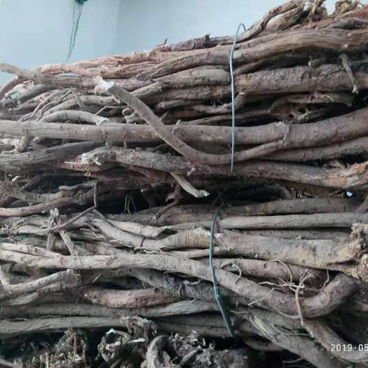 定西漳縣 野黃芪大條五條一斤批發