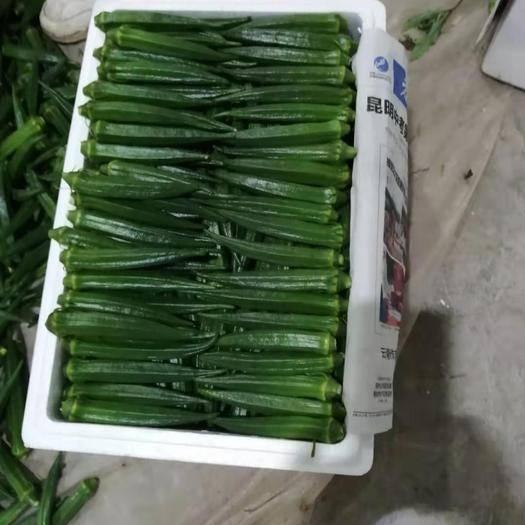 云南省昆明市呈贡区 精品秋葵