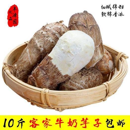 尋烏縣 包郵10斤農家自種毛芋頭小芋頭六月芋牛奶芋子
