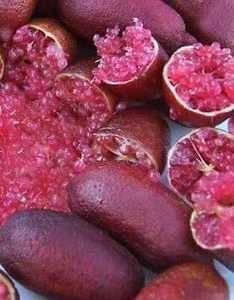 灵山县手指柠檬嫁接苗 新品种手指柠檬树苗 檬树苗四季可种植