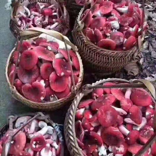 云南省德宏傣族景颇族自治州瑞丽市 红菇