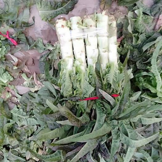开封通许县 红叶莴笋大量上市