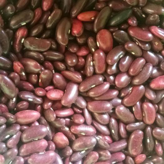 富源縣 大量供應大紅豆有需要的老板請聯系