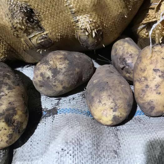 内蒙古自治区呼伦贝尔市牙克石市兴佳2号土豆 大白,226,兴佳,尤金,闽薯
