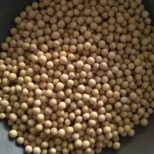 绥化绥棱县黑龙江大豆 ,蛋白42左右