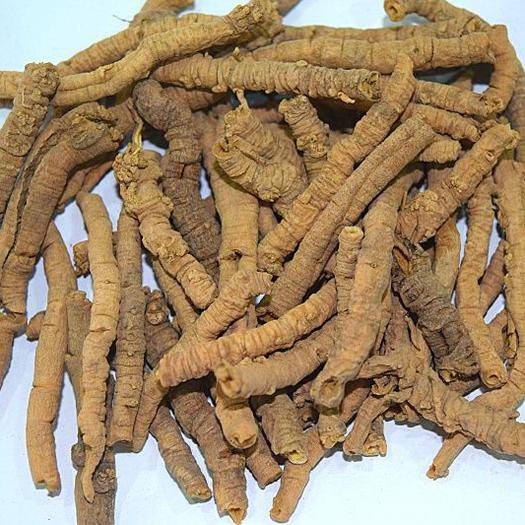 成都金牛區 遠志干貨產地藥材零批藥用食用增強記憶