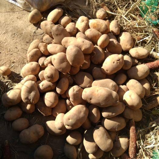 河北省张家口市涿鹿县 土豆品种有大白花,二二六,晋薯十六