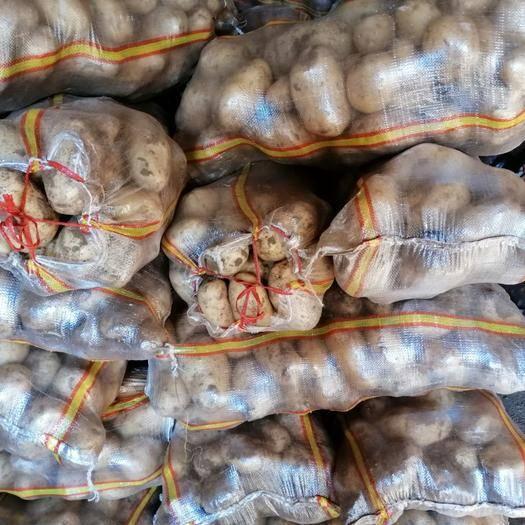 内蒙古自治区呼和浩特市武川县 .武川县全国有名的.产土豆区,口感好,颜色好,耐储存。