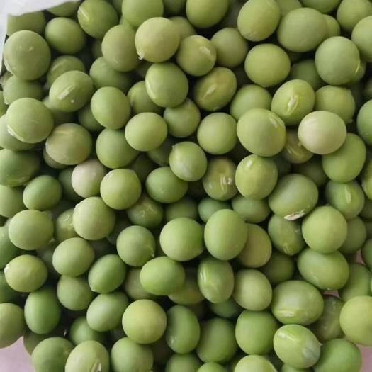 安达市双青豆 大量现货