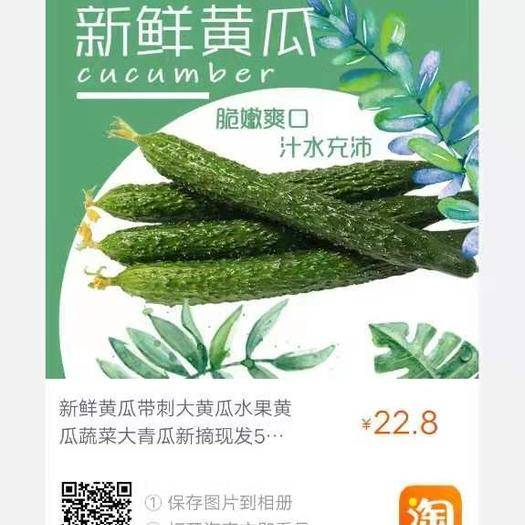 山东省潍坊市寿光市 精品黄瓜供应