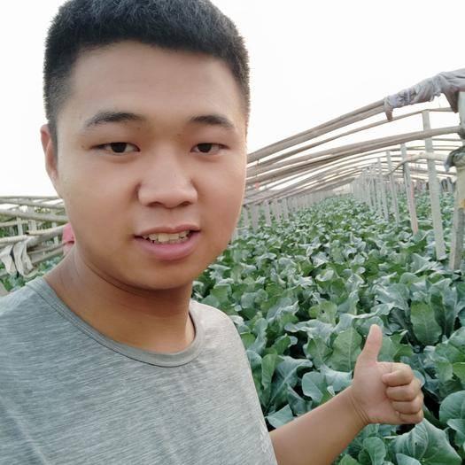 高青县白面青梗松花菜 <精选>沙土地❤️黄河水❤️万亩有机散花2-4斤净菜专业代收
